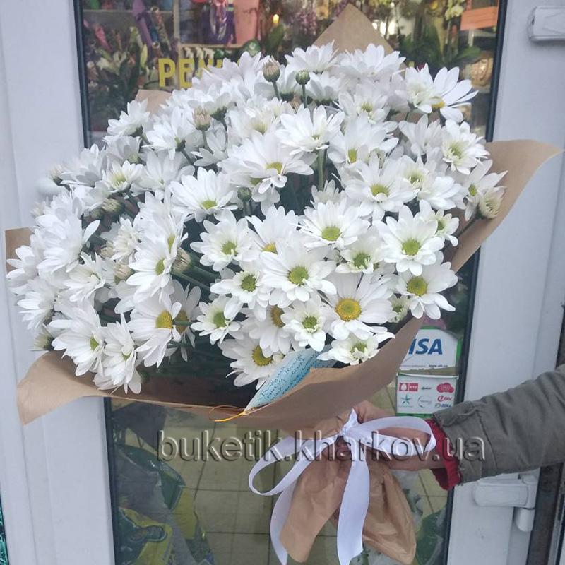 Купить хризантему в Харькове