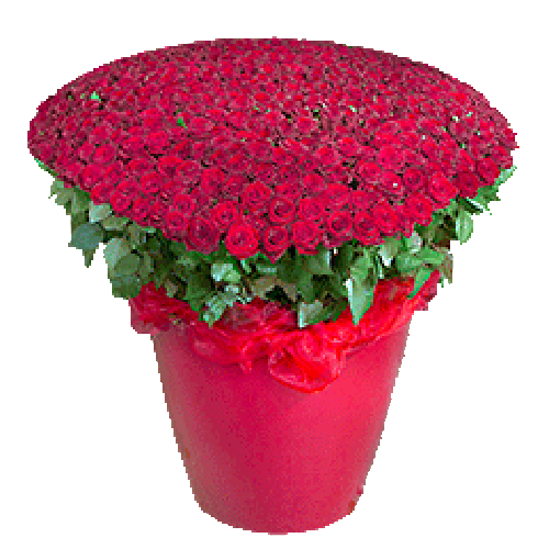 фото товара 301 красная роза в коробке