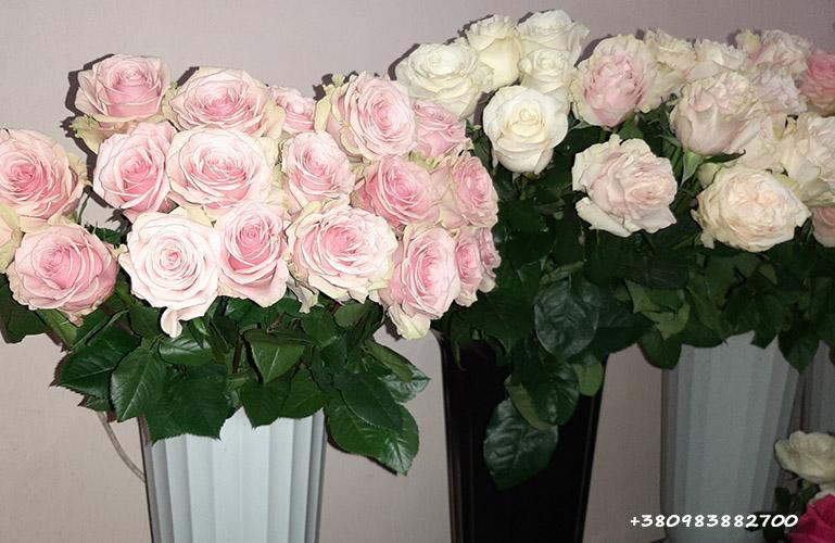цветы в Запорожье фото магазина