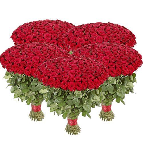 букет 501 красная роза