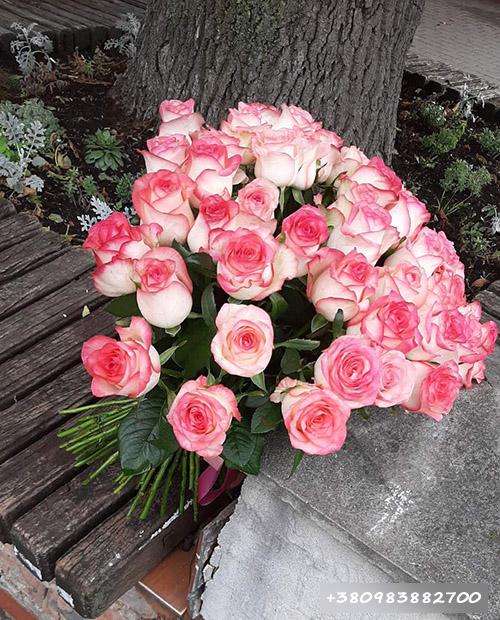 51 розовая роза Джумилия